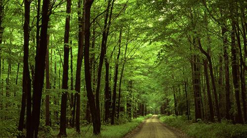 Trening izdržljivosti šuma