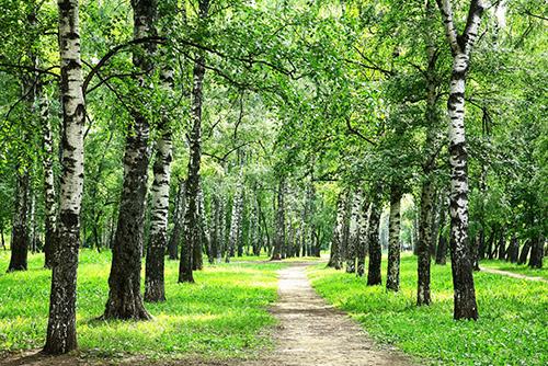 Trening izdržljivosti trčanje šuma